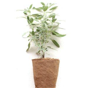 Plantas Libres de Plástico